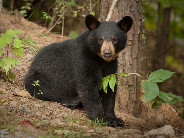 Bear kills Indian-origin student in US