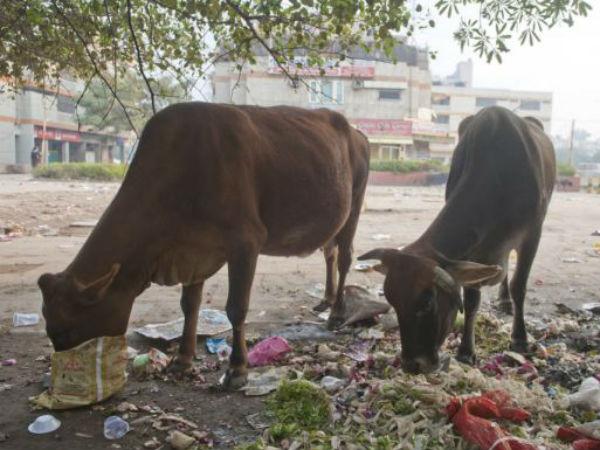 Littering in Delhi.
