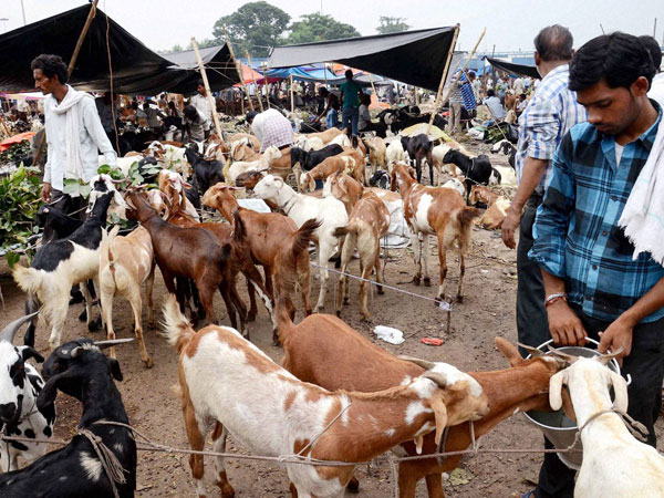 Goats on sale ahead of Eid-Ul-Zuha festival