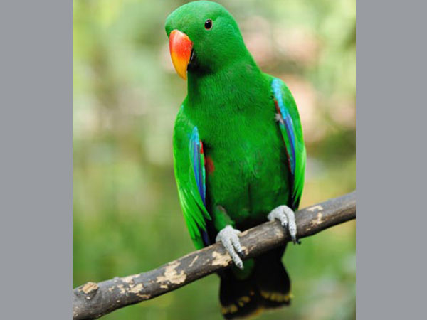 English-speaking parrot goes missing 4 years ago, comes back chattering in Spanish !