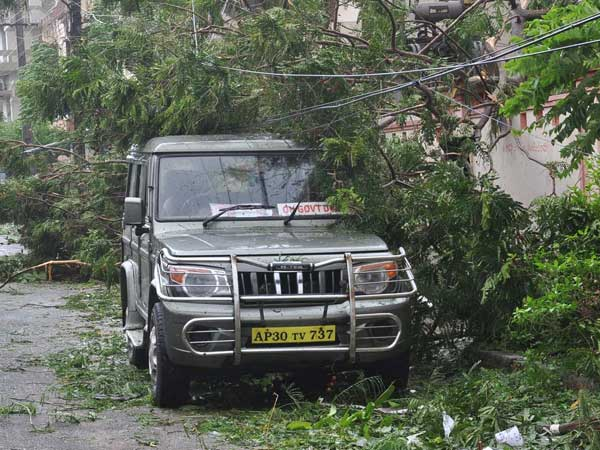 Odisha loses many precious trees in Cyclone Hudhud