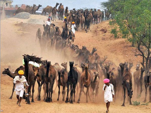 Foreign tourists throng Pushkar fair; security reviewed