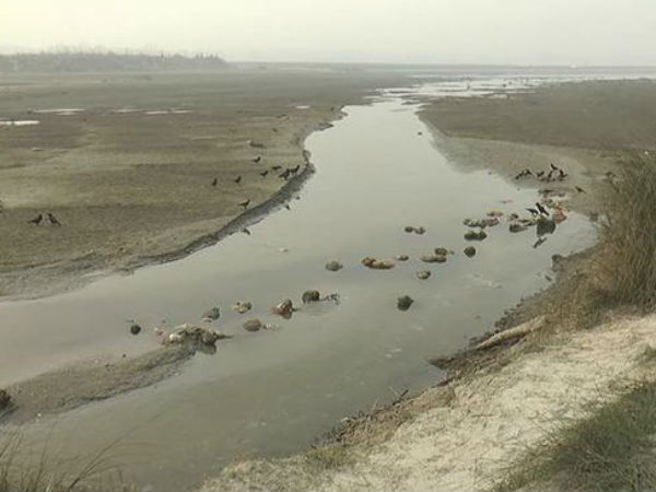 UP: Dead bodies found floating in Ganga