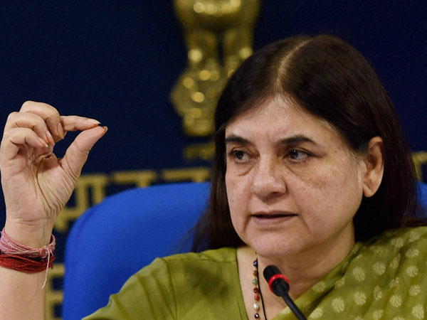 Maneka Gandhi bats for surface cleaner made from cow urine extracts.