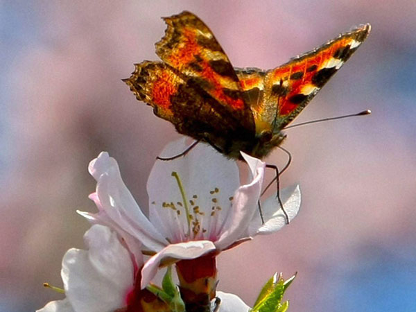 Nagaland to document butterflies