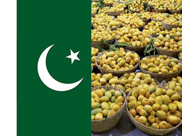 What Pakistan has exported to the world?