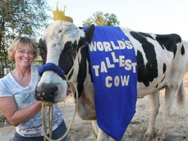 World's tallest cow ever dies in US