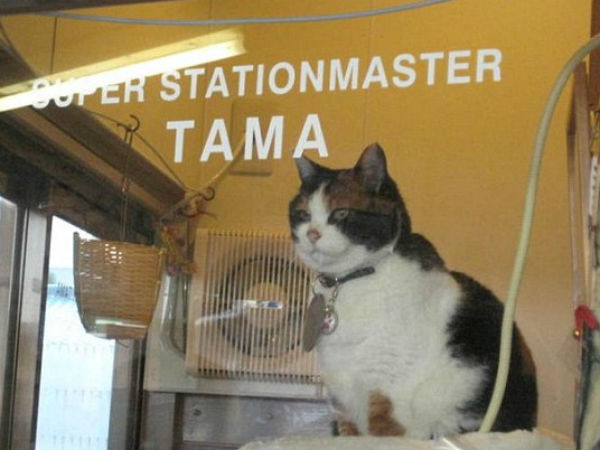 Imagine cat as station master