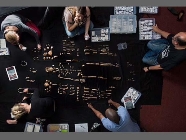 Homo Naledi remains