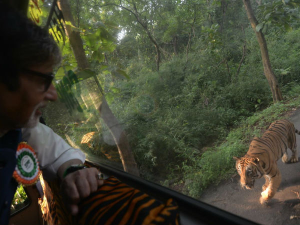 Big B was chased by a tiger for four kms