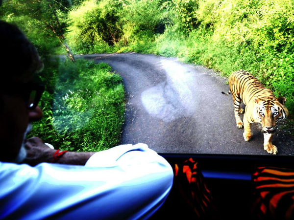 Big B chased by a tiger for four kms