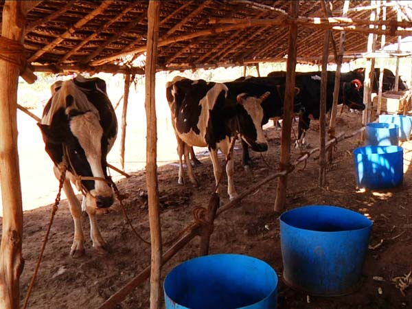 Cow shelters: Cong, BJP MLAs unite