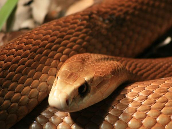 Venomous snakes found in package in US