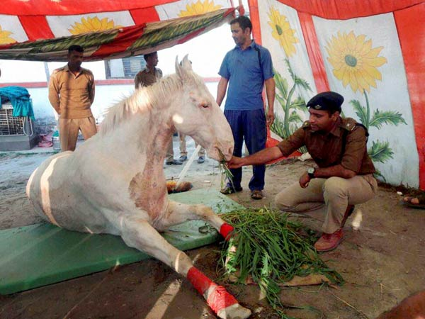 Shaktimaan: The brave horse is no more