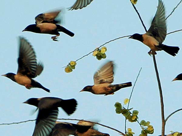 Three lakh migratory birds throng Kashmir Valley (Representative image)