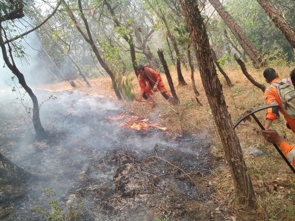 'Take steps to prevent forest fire'