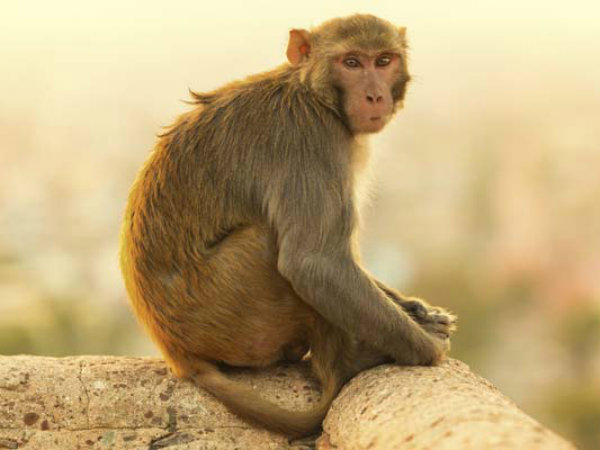 Monkey steals cash from jewellery shop