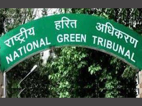 Revive water bodies in Dwarka: NGT