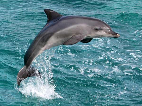 Dolphins got blind because of pollution'