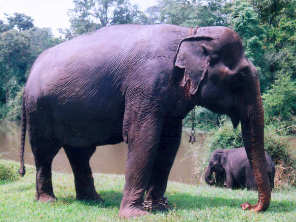 Elephant dies of heart attack