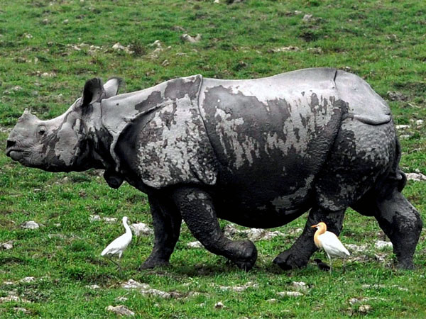Govt can't stop rhino poaching alone
