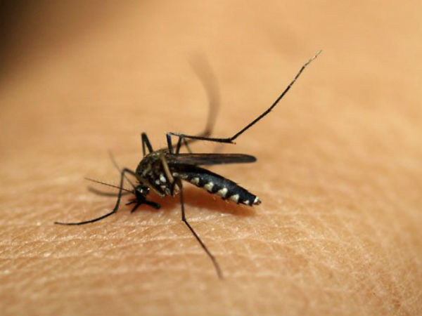 Chikungunya cases in Delhi rise to 560
