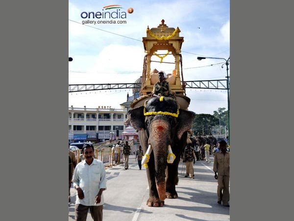 Elephants take part in rehersals for the Jumbo savari