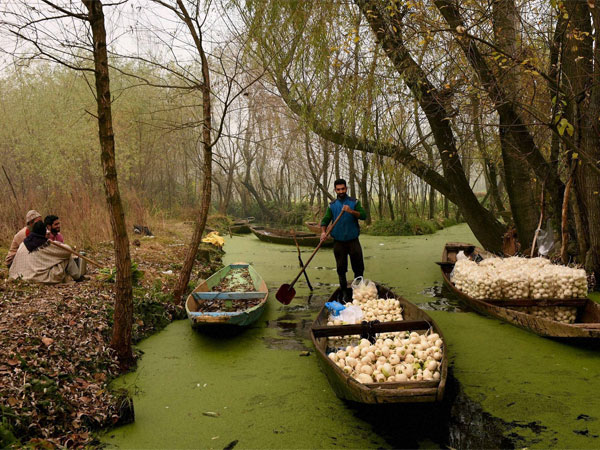 Farmers began business as usual in Kashmir