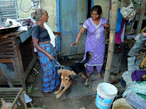 Dogs are saviours for these women: