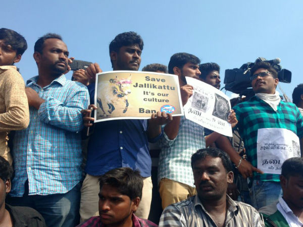Thousands gather in support of Jallikattu: