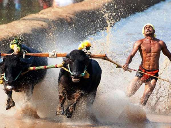 Kambala is now legal in Karnataka, President promulgates ordinance