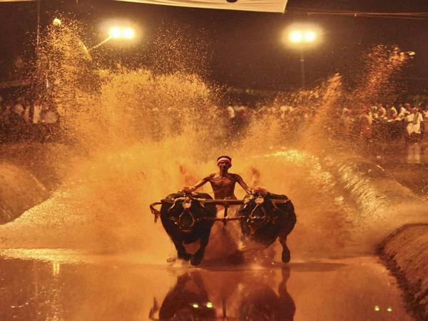 Kambala at night