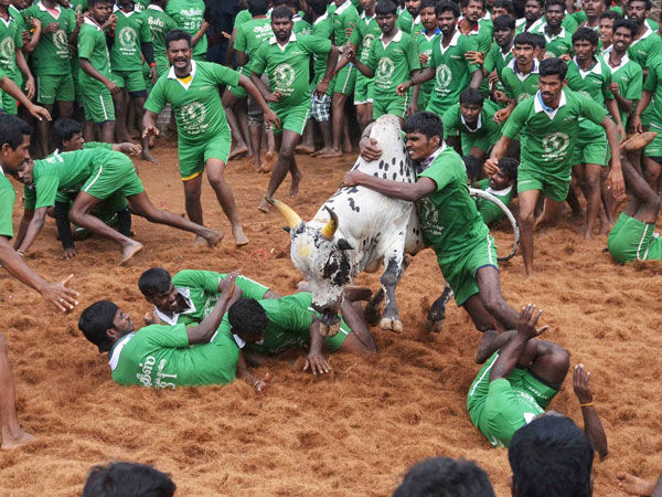 TN's Jallikattu bill challenged in SC