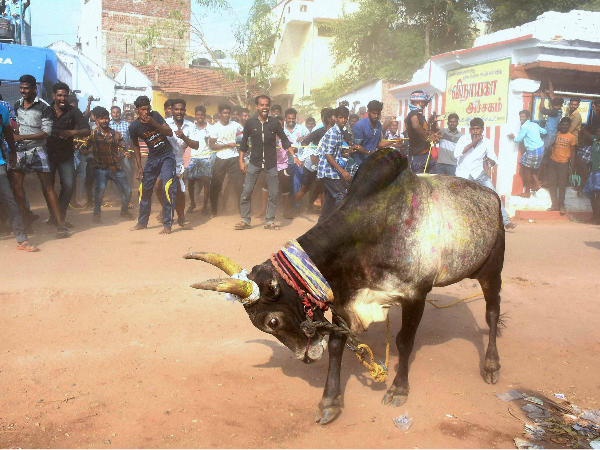 Tamil Nadu: Two dead, 28 injured in jallikattu