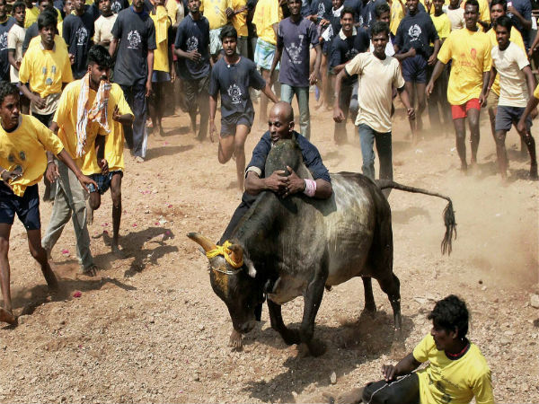 Jallikattu conducted at Manapparai in Tamil Nadu, protesters unhappy with government