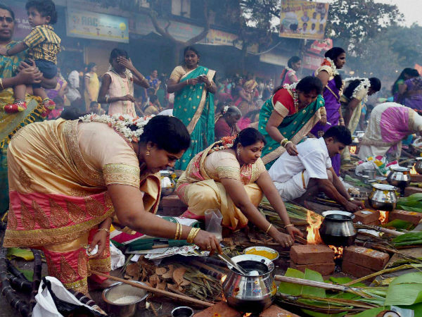 TN celebrates Pongal with traditional fervour