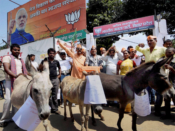 UP assembly polls: 'Spare the donkey please', animal activists say