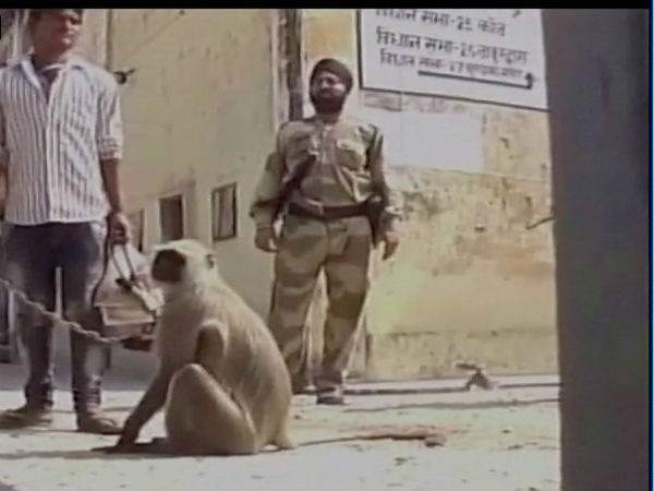 Uttar Pradesh polls 2017: No, it's not 'donkeys', here monkeys fight monkeys