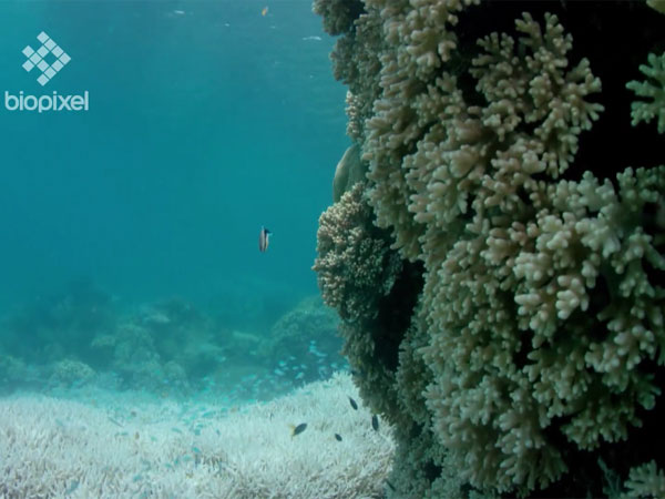 Great Barrier Reef did not have enough time to recover