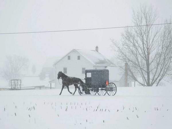 A horse and buggy drive through a winter snow storm