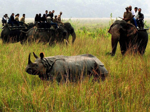 Forest guards kill rhino poachers in Assam national park. (File photo)