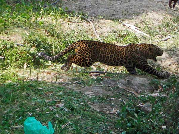 Assam: 4 Arunachal govt employees arrested with leopard skin, bones