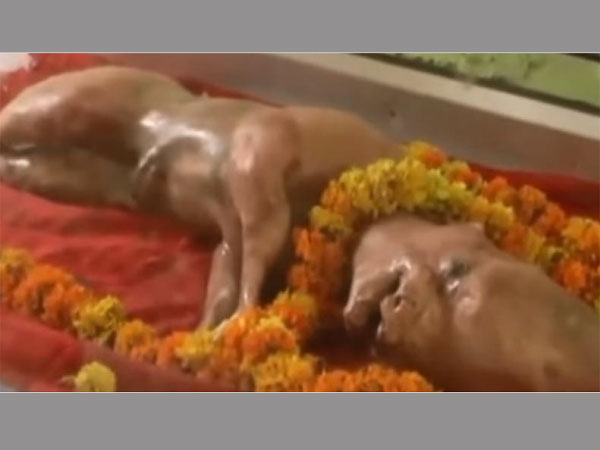 Cow with human head worshipped as Vishnu avatar in UP