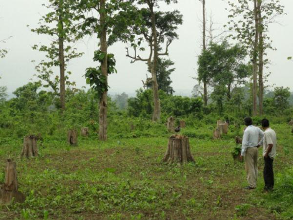 short essay on deforestation in india