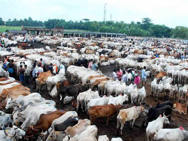 Kerala assembly to discuss Centre's cattle sale for slaughter rules