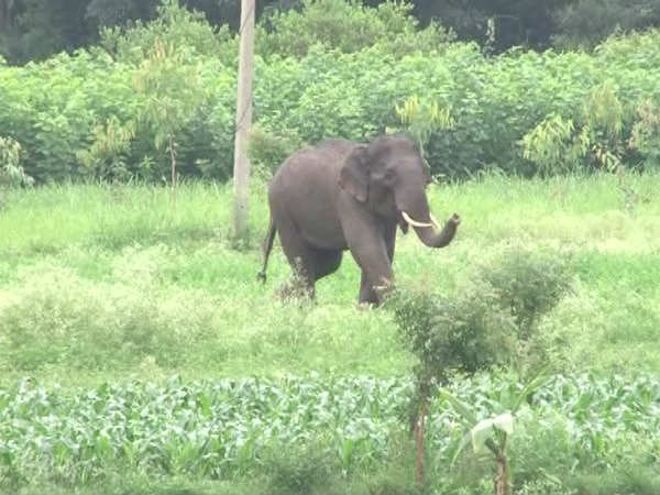 Four trampled to death by elephant in city outskirts