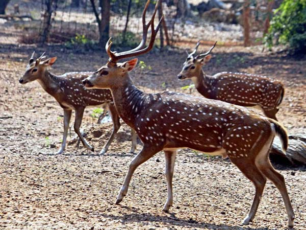 Nine held for poaching deer inside Sathyamangalam Tiger Reserve