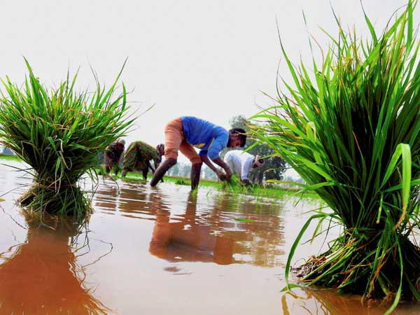 Farmers still unaware of details of PM Fasal Bhima Yojana (Representative image)