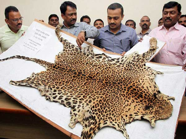Poachers held for killing leopard, smuggling skin