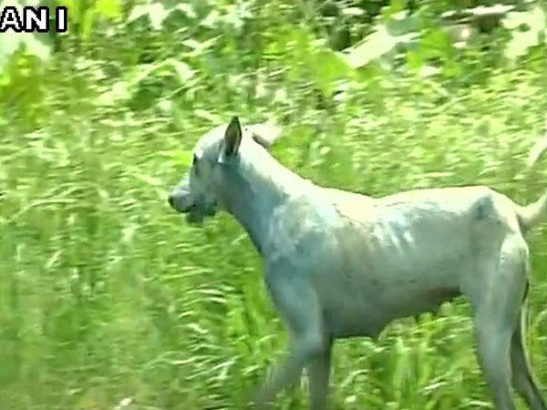 [What is turning Mumbai dogs blue?]